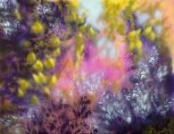 Fleurs evanescentes pastels à la cire acrylique spray paint sur toile 116X89 cm