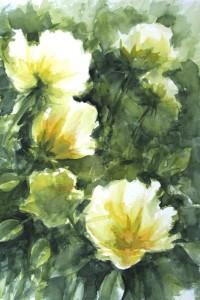 fleurs jaune pale aquarelle 36X51 redim800