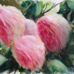 Roses Ronsard, aquarelle sur papier, 18X26 cm
